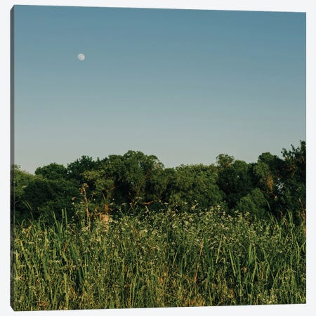 Summer Moon III Canvas Print #BTY1397} by Bethany Young Canvas Art