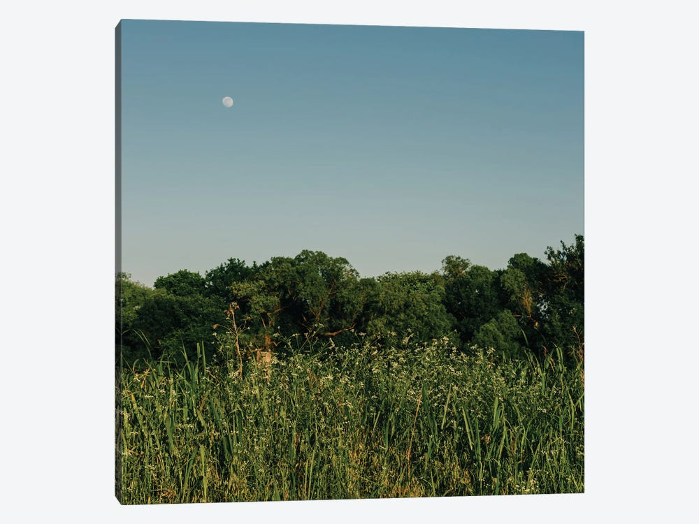 Summer Moon III by Bethany Young 1-piece Canvas Art Print