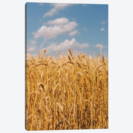 Summer Wheat Fields II Canvas Print #BTY1401} by Bethany Young Art Print