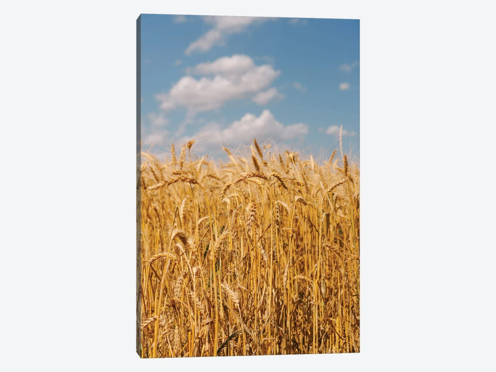 Summer Wheat Fields II by Bethany Young 1-piece Canvas Print