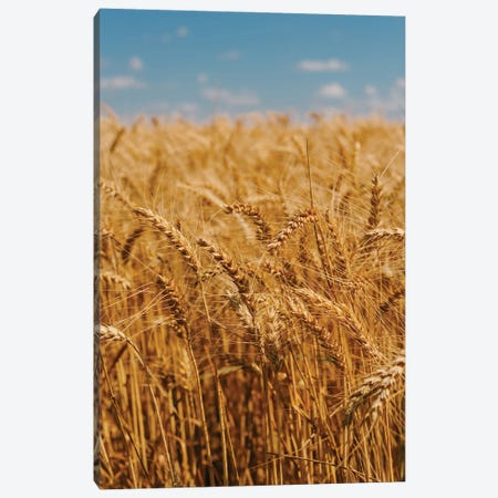 Summer Wheat Fields Canvas Print #BTY1402} by Bethany Young Canvas Art Print