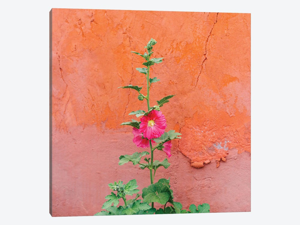 Santa Fe Flowers II by Bethany Young 1-piece Canvas Art Print