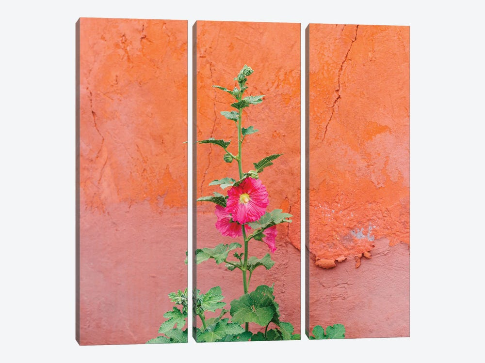 Santa Fe Flowers II by Bethany Young 3-piece Canvas Print