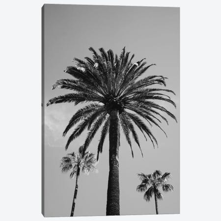 Beverly Hills Sky III Canvas Print #BTY14} by Bethany Young Canvas Art