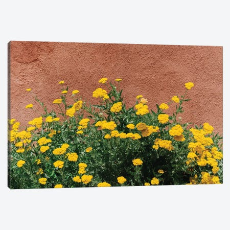 New Mexico Blooms Canvas Print #BTY1500} by Bethany Young Canvas Art