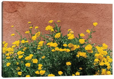 New Mexico Blooms Canvas Art Print