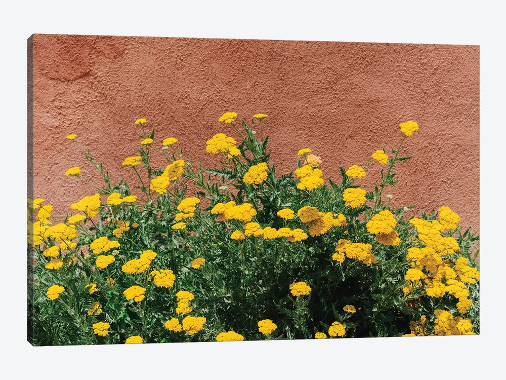 New Mexico Blooms by Bethany Young 1-piece Canvas Print
