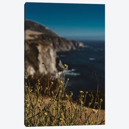 Big Sur Wild Flowers II Canvas Print #BTY15} by Bethany Young Canvas Artwork