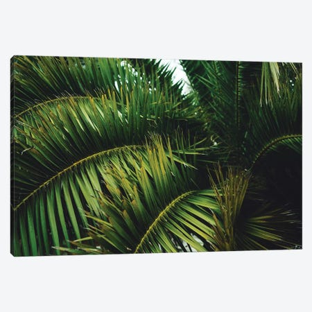 San Francisco Palm Tree Canvas Print #BTY160} by Bethany Young Canvas Wall Art