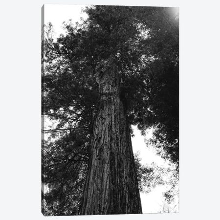 Redwood Forest XV Canvas Print #BTY178} by Bethany Young Canvas Art Print