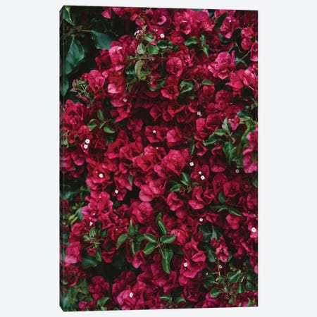 Carmel Blooms Canvas Print #BTY181} by Bethany Young Canvas Artwork