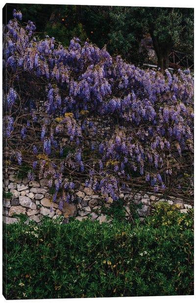 Amalfi Coast Blooms V Canvas Art Print