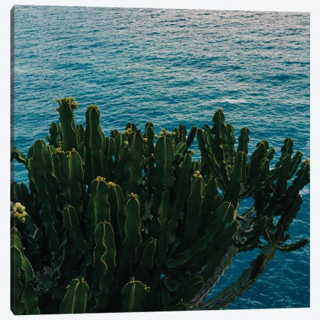 Amalfi Coast Cactus II Canvas Print #BTY194} by Bethany Young Canvas Art
