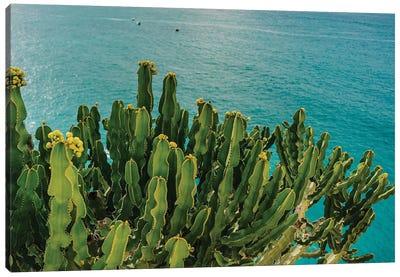 Amalfi Coast Cactus I Canvas Art Print