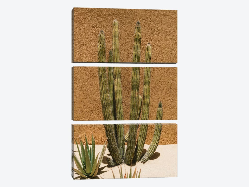 Cabo Cactus II by Bethany Young 3-piece Art Print