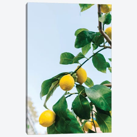 Amalfi Coast Lemons III Canvas Print #BTY1} by Bethany Young Canvas Artwork
