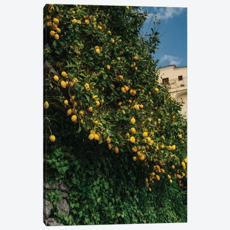 Amalfi Coast Lemons II Canvas Print #BTY225} by Bethany Young Canvas Artwork