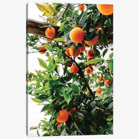 Amalfi Coast Oranges II Canvas Print #BTY239} by Bethany Young Canvas Artwork