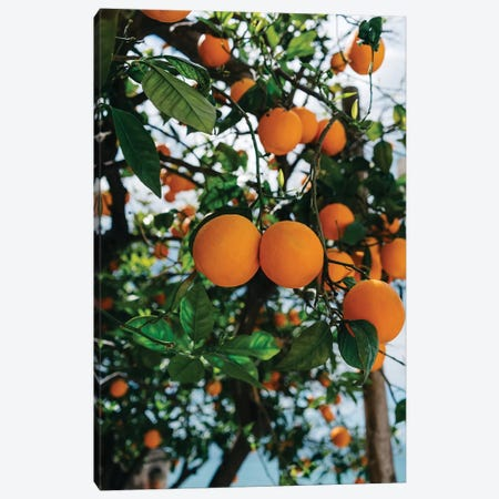 Amalfi Coast Oranges III Canvas Print #BTY240} by Bethany Young Art Print