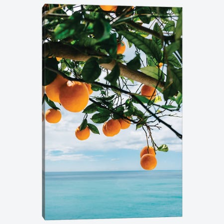 Amalfi Coast Oranges IV Canvas Print #BTY241} by Bethany Young Canvas Print