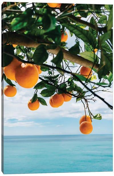 Amalfi Coast Oranges IV Canvas Art Print