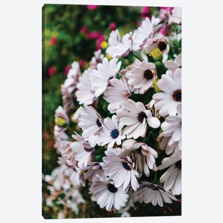 Positano Blooms V Canvas Print #BTY272} by Bethany Young Canvas Artwork
