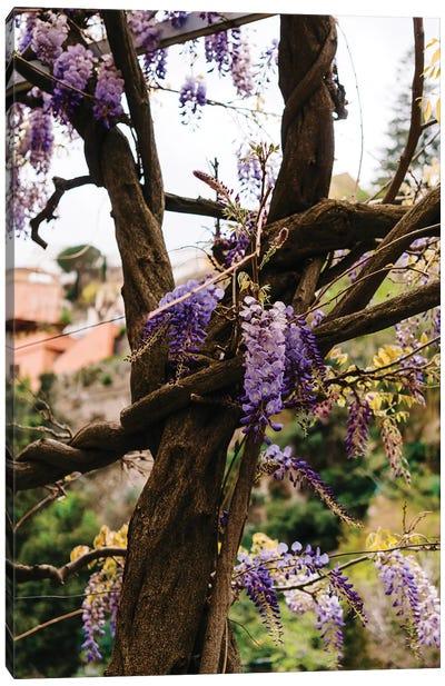 Positano Blooms VI Canvas Art Print
