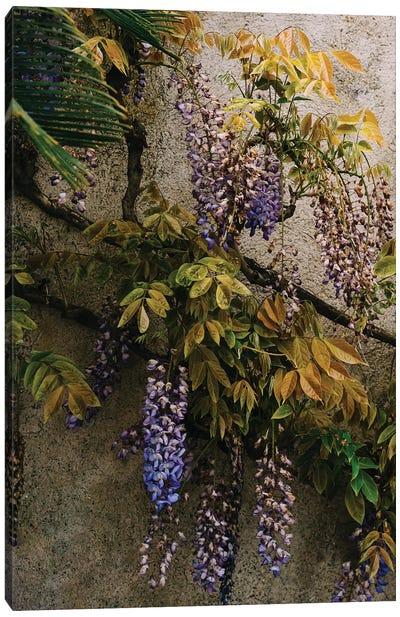 Positano Blooms VIII Canvas Art Print