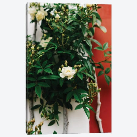 Positano Blooms I Canvas Print #BTY278} by Bethany Young Canvas Wall Art