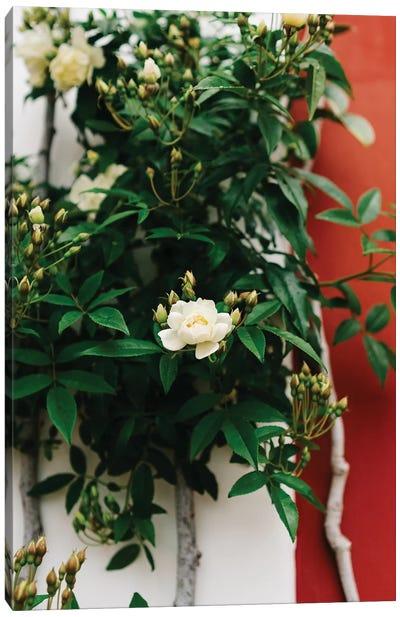 Positano Blooms I Canvas Art Print