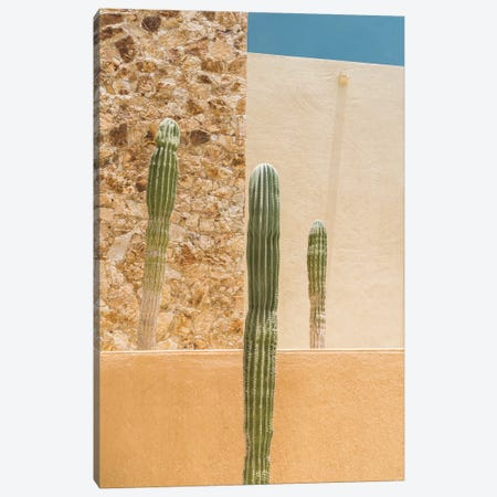 Abstract Cactus Canvas Print #BTY370} by Bethany Young Art Print