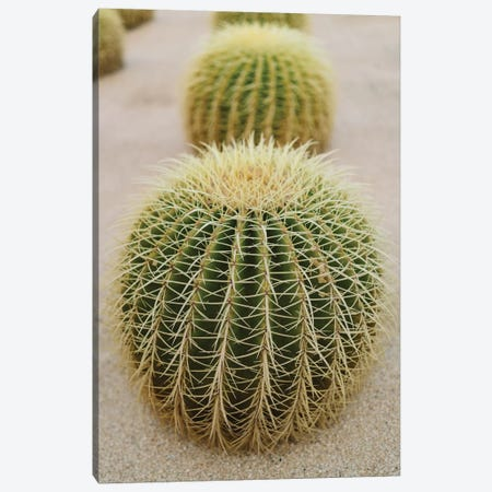 Cabo Cactus IV Canvas Print #BTY379} by Bethany Young Art Print