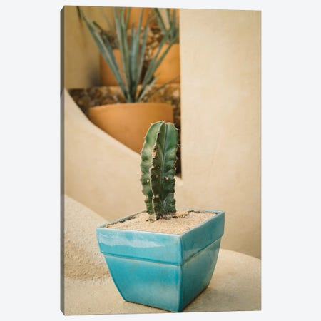 Cabo Cactus V Canvas Print #BTY380} by Bethany Young Canvas Wall Art