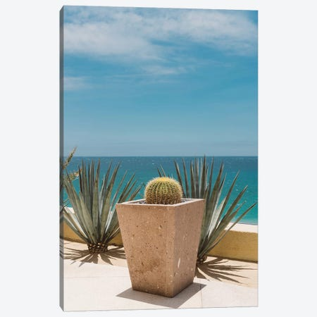 Cabo Cactus Canvas Print #BTY383} by Bethany Young Canvas Artwork