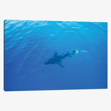 Hawaiian Shark IV Canvas Print #BTY40} by Bethany Young Canvas Artwork