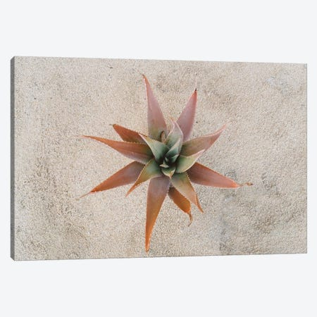 Mexico Succulent Canvas Print #BTY415} by Bethany Young Canvas Art Print