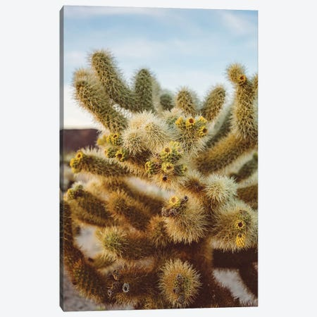 Cholla Cactus Garden IV Canvas Print #BTY439} by Bethany Young Canvas Artwork