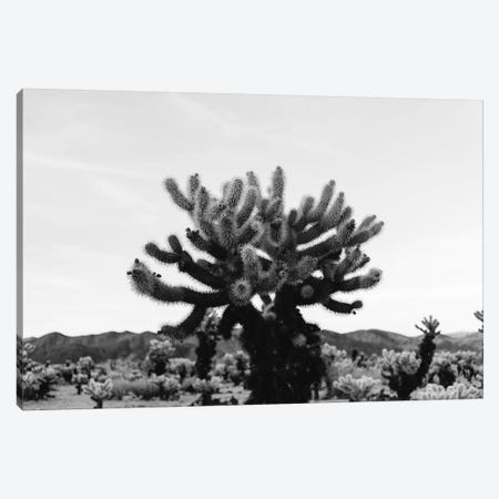 Cholla Cactus Garden XI Canvas Print #BTY444} by Bethany Young Canvas Art