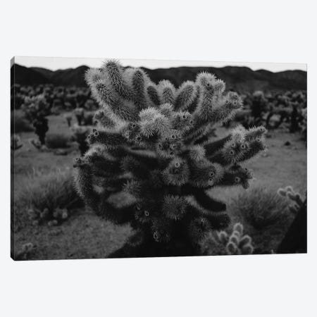 Cholla Cactus Garden XIII Canvas Print #BTY445} by Bethany Young Canvas Artwork