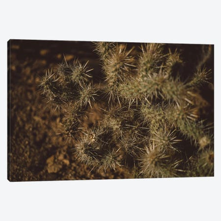 Joshua Tree Cactus Canvas Print #BTY451} by Bethany Young Canvas Wall Art