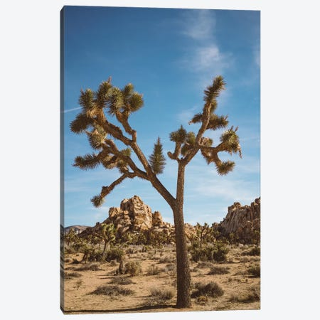 Joshua Tree National Park II Canvas Print #BTY452} by Bethany Young Canvas Artwork