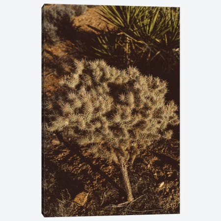 Joshua Tree National Park XIX Canvas Print #BTY456} by Bethany Young Canvas Print