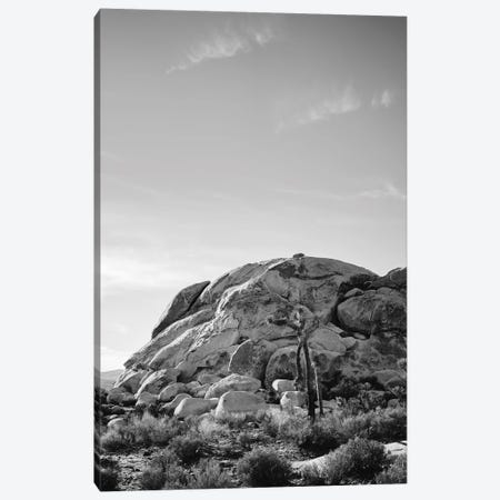 Joshua Tree National Park XV Canvas Print #BTY457} by Bethany Young Canvas Print