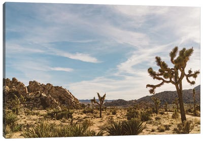 Joshua Tree National Park XXVI Canvas Art Print