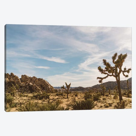 Joshua Tree National Park XXVI Canvas Print #BTY465} by Bethany Young Canvas Art