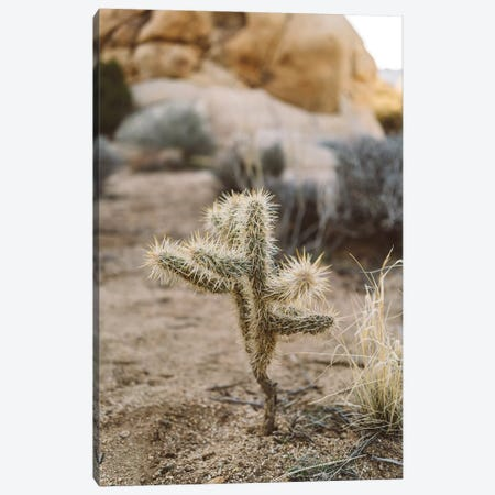 Joshua Tree National Park XVI Canvas Print #BTY48} by Bethany Young Canvas Wall Art