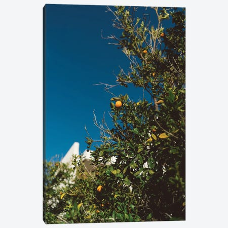 California Orange Tree Canvas Print #BTY543} by Bethany Young Canvas Artwork