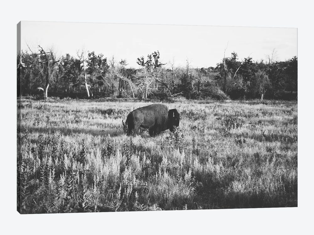Lone Buffalo 1-piece Art Print