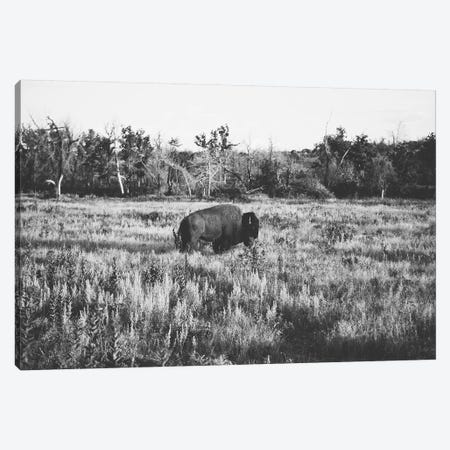 Lone Buffalo Canvas Print #BTY55} by Bethany Young Canvas Wall Art