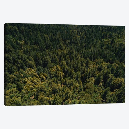 California Redwood Forest II Canvas Print #BTY561} by Bethany Young Canvas Artwork